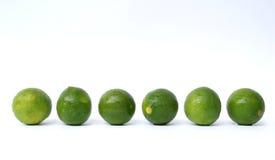 Line up av limefrukter Royaltyfria Bilder
