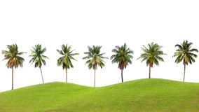 Line up of coconut tree and grassland isolated on white backgrou Stock Photography