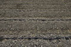Line of water drop irrigation over the  plants or vegetables bed. View of water drop spots from the dripping line irrigation which made for plants or vegetables Stock Image