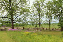 Line of wood fences and purple flowers Stock Image