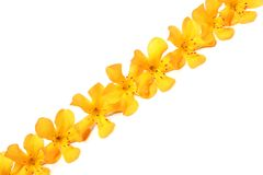 Line of yellow flowers Royalty Free Stock Photos
