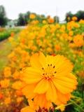 Linea arancio Immagine Stock
