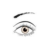 Linea arte dell'occhio di Brown royalty illustrazione gratis