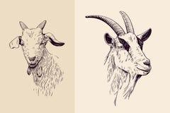 Linea arte della capra royalty illustrazione gratis