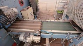 Linea automatizzata della preparazione della pianta, piante crescenti della pianta moderna, fiori che piantano trasportatore archivi video