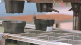 Linea automatizzata nella serra per i fiori crescenti Trasportatore in una serra del fiore Serra moderna stock footage