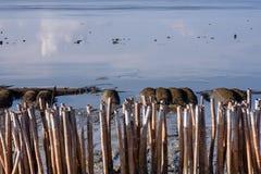 Linea bambù asciutto Immagini Stock