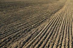 Linea con i semi sul suolo del campo di agricoltura Fotografia Stock