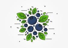 Linea concetto del mirtillo di vettore di arte illustrazione vettoriale