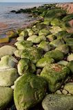 Linea costiera alla sorgente 2 Fotografie Stock