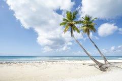 Linea costiera caraibica idilliaca Fotografia Stock Libera da Diritti