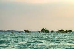 Linea costiera con gli arbusti della mangrovia Fotografia Stock Libera da Diritti