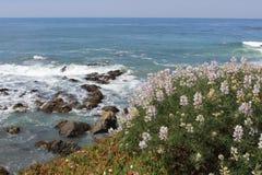 Linea costiera con i fiori selvaggi nella priorità alta Immagine Stock Libera da Diritti
