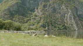 Linea costiera del fiordo norway Colpo liscio del carrello video d archivio