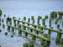 Linea costiera del fiume Columbia Fotografie Stock