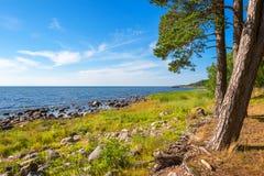 Linea costiera del Mar Baltico L'Estonia Immagine Stock Libera da Diritti