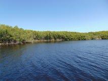 Linea costiera della mangrovia fotografie stock libere da diritti