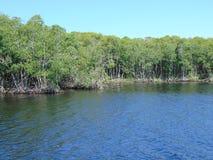 Linea costiera della mangrovia fotografia stock libera da diritti