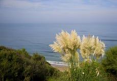 Linea costiera di Biarritz Fotografia Stock Libera da Diritti