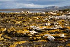 Linea costiera Falkland Islands Fotografie Stock