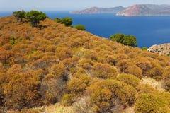 Linea costiera mediterranea selvaggia Immagine Stock Libera da Diritti