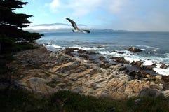 Linea costiera pacifica Immagine Stock Libera da Diritti