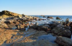 Linea costiera rocciosa a bassa marea sotto il parco in Laguna Beach, California di Heisler Immagine Stock