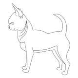 Linea del cane della chihuahua Immagine Stock