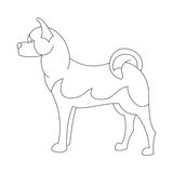 Linea del cane di Akita Immagini Stock