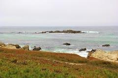 Linea della costa, fiori alpini fotografia stock