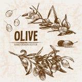Linea dettagliata oliva di vettore di Digital di arte Fotografie Stock Libere da Diritti