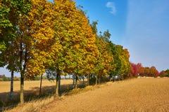 Linea di alberi in autunno fotografie stock libere da diritti