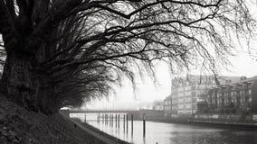 Linea di alberi - Brema, Germania Immagini Stock