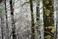 Linea di alberi lungo un percorso di camminata dopo precipitazioni nevose fresche Immagine Stock Libera da Diritti