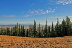 Linea di alberi sempreverdi che trascurano una valle Fotografia Stock Libera da Diritti