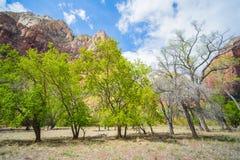 Linea di alberi in Zion fotografia stock