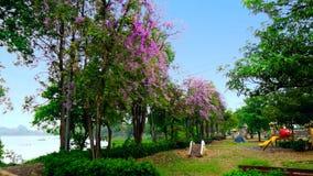 Linea di albero del fiore della regina nel parco Fotografia Stock Libera da Diritti