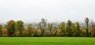 Linea di albero nella caduta in anticipo con nebbia Immagine Stock