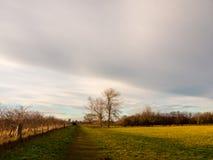 Linea di albero vuota dello spazio aperto del paesaggio del paese cielo Immagini Stock