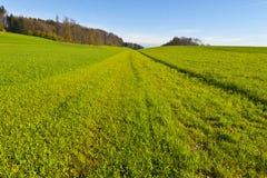 Linea di erba di falciatura Fotografie Stock