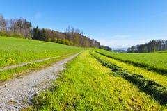 Linea di erba di falciatura Immagine Stock Libera da Diritti