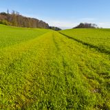 Linea di erba di falciatura Immagine Stock