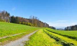Linea di erba di falciatura Fotografia Stock