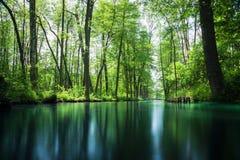 Linea di flusso foresta della baldoria vicino a Berlino Fotografia Stock Libera da Diritti