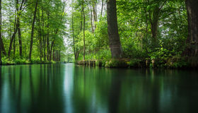 Linea di flusso foresta della baldoria vicino a Berlino Fotografie Stock