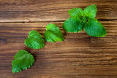 Linea di foglie della melissa su legno Fotografia Stock Libera da Diritti