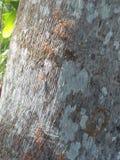 linea di formiche Fotografia Stock Libera da Diritti