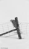 Linea di recinzione di Snowy Fotografia Stock
