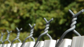 Linea di recinzione verde di vita Immagini Stock Libere da Diritti