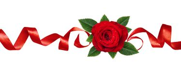 Linea disposizione con il fiore e le foglie della rosa rossa Immagine Stock